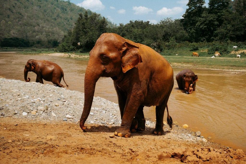 Elephant Nature Park Thaimaassa, missä hoidetaan kaltoin kohdeltuja norsuja. Kuva on otettu pyöröpolarisaatiosuotimella heijastuksien vähentämiseksi. Kuva: Anssi Lepikko.