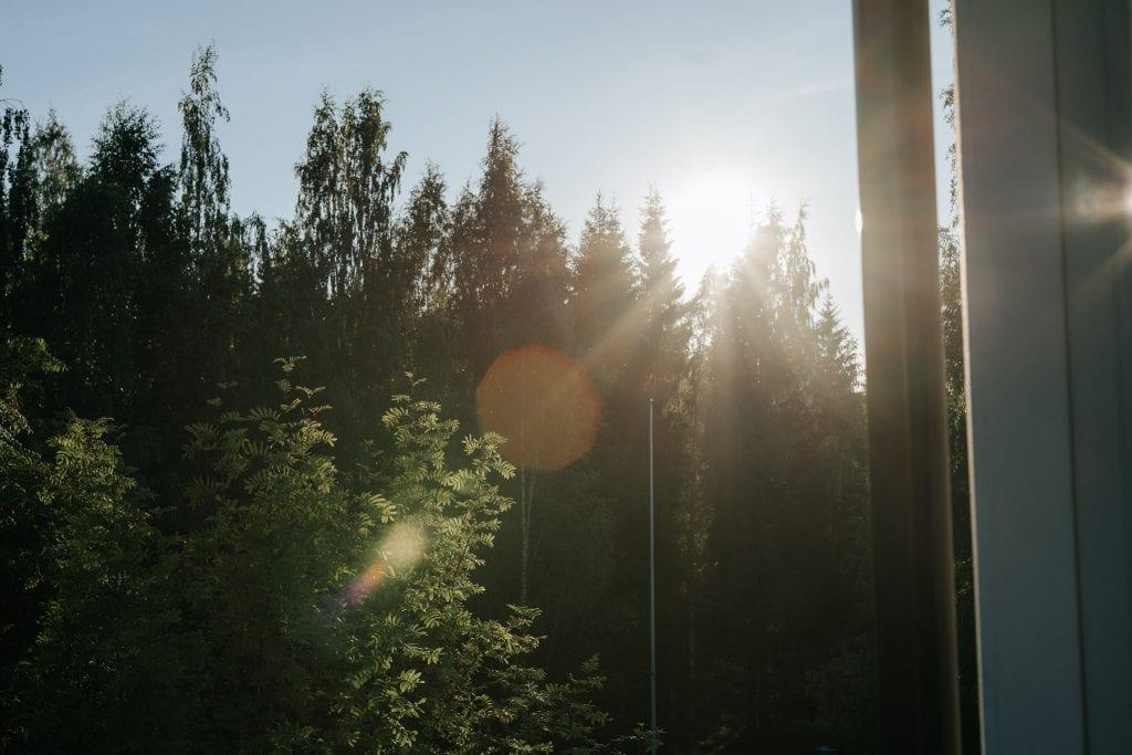 Ilta-aurinko paistaa puiden läpi.