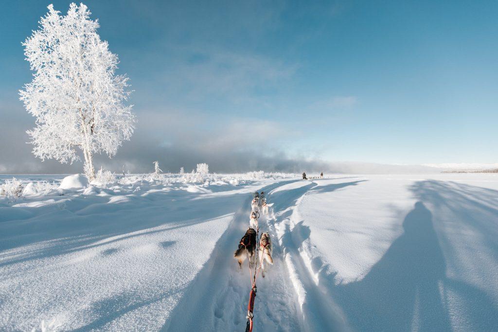 Koiravaljakko johdattaa kelkkaa läpi lumisen erämaan