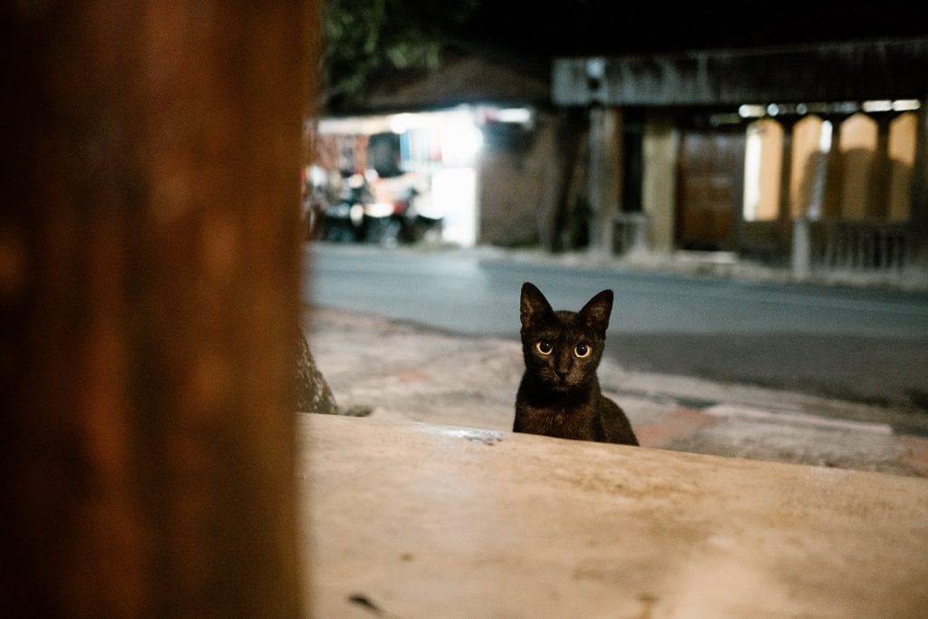 Kissa tuijottaa tuimasti kameraan ravintolan edustalla