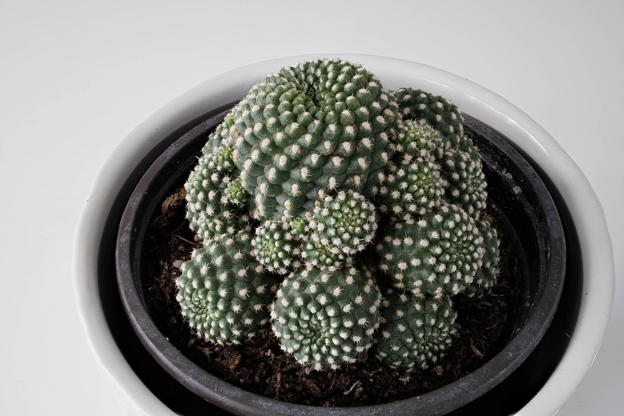 Kaktus laajalla syväterävyydellä.